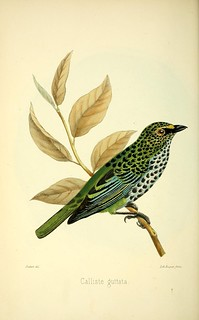 n67_w1150 | by BioDivLibrary