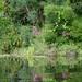 Blooming Bayou