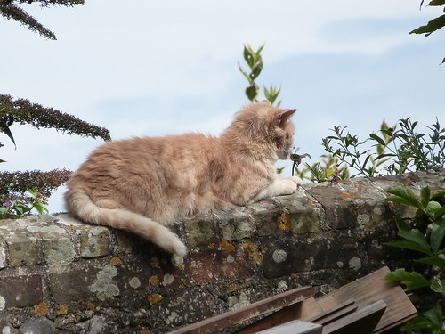 cat on a wall | by Linda B 2011