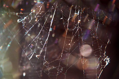 Oh What A Tangled Web We Weave | by pni