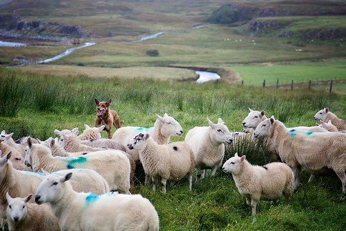 Herding | by Perry McKenna