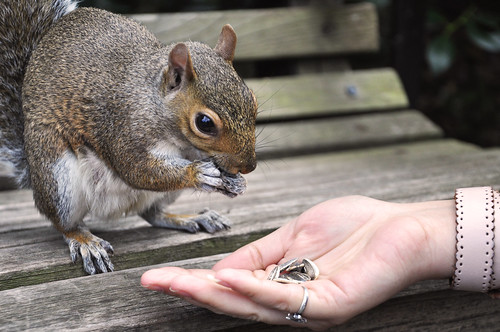 Feeding squirrels | by yulia bogomolova