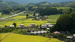 How green Japan is...