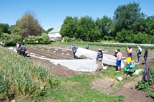 Harvest and planting at Earthworks Urban Farm