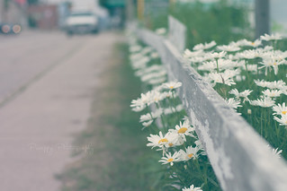 HFF ~ Worn, tired, and in the daisies edition | by Preappy