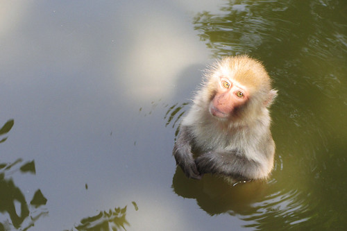 lovely monkey | by Vivienne Chang