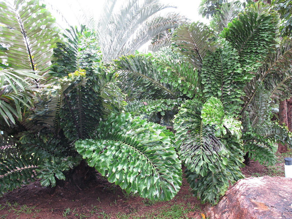 Tropical Garden Tropical Island