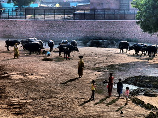 Agra - Livestock farming | by sharko333