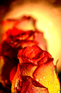DSC_0790 | by RosePetalPhotography-Thanks for over 448,298 visit