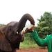 Baby elephant at Sheldricks