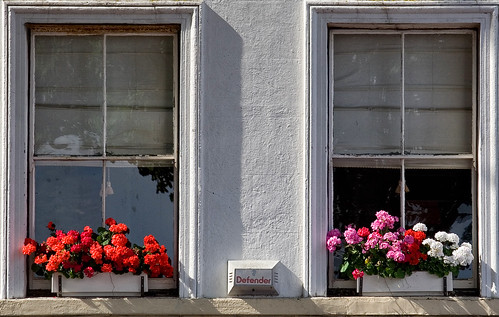 Window Boxes-21 July 2012 | by Martyn Gill - IMAGES -731,000 Views - Thank You...
