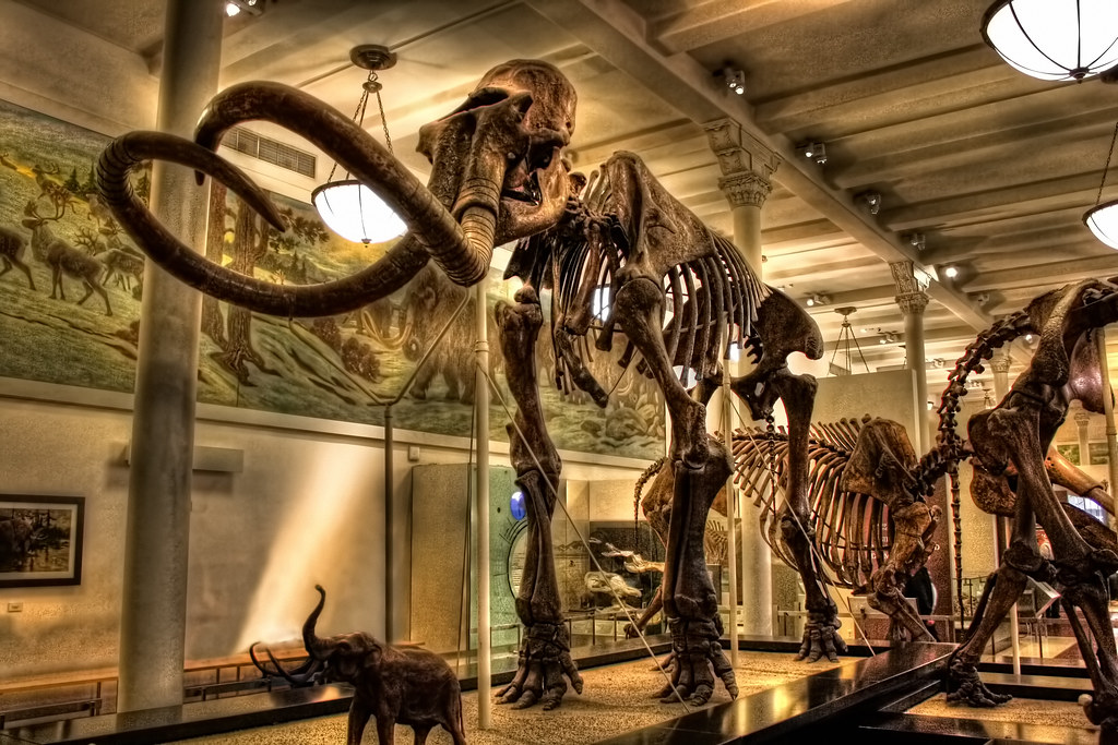 Mammoth American Museum Of Natural History