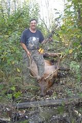 Dale's elk (2)
