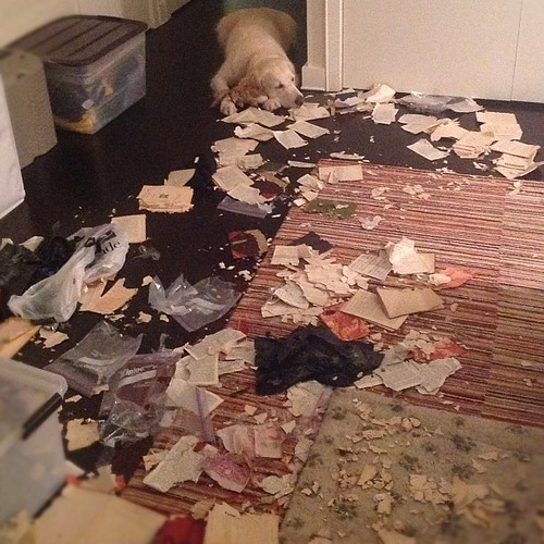 In which Sailor destroys much of my rare books collection. | by epc