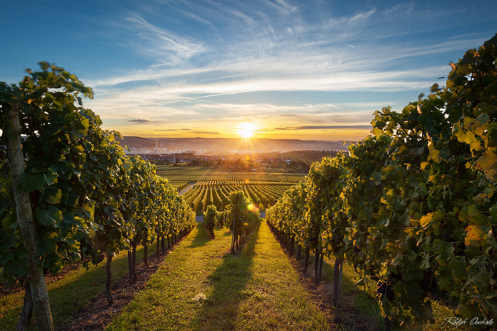 Vineyard Kappelberg - sunset | Yesterday i revisited the