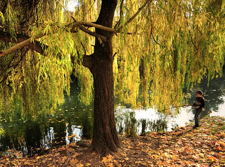 Fishing under a Weeping Willow | by Habub3