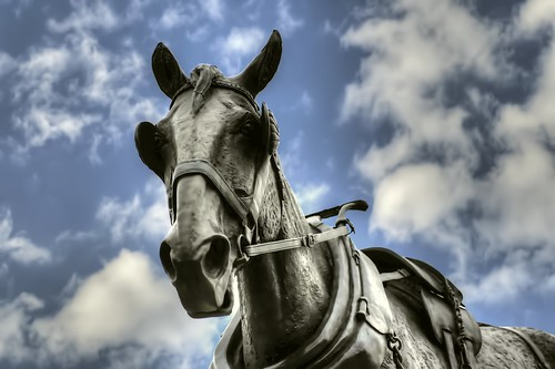SHIRE HORSE STATUE | by Shaun's Photographic World.