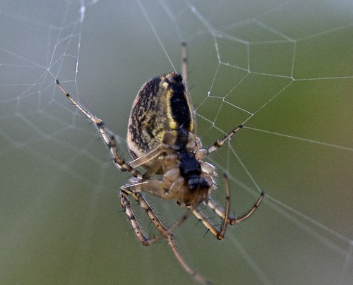 Spinning a web | by John Eastwood