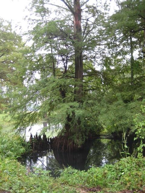 Mill Pond at Clarks River National Wildlife Refuge | Flickr