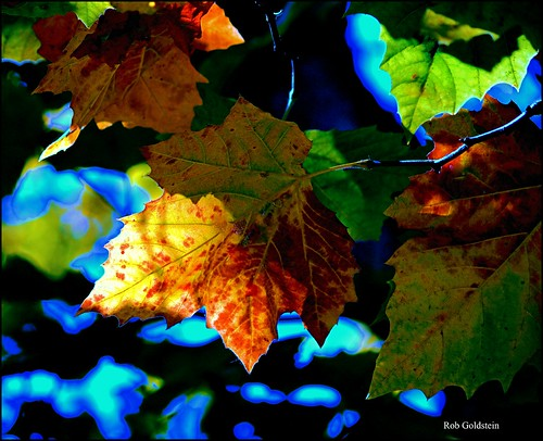 Autumn | by Rob Goldstein - hopelessly behind
