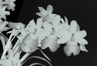 Orchids | by San Francisco Gal