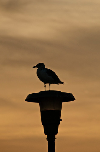 Seagull Silhouette - Explored (9/17/12) | by 57rroberts