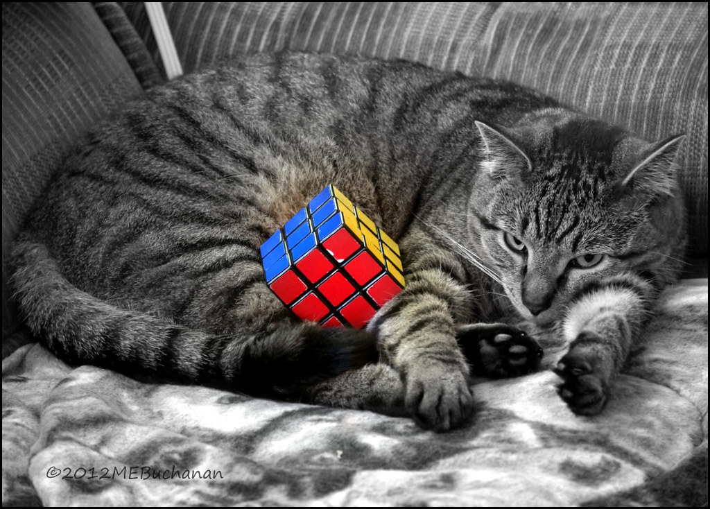 Rubik's Cat | FYI, Felix didn't really solve the rubik's ... Fyi Cat