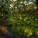 Rhinog Fawr Woods (8 of 9)