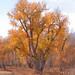 YNP-GTNP-fall-colors04