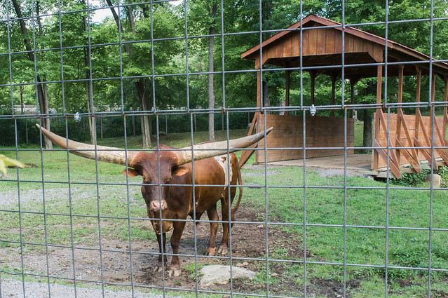 Doin' the Watusi!