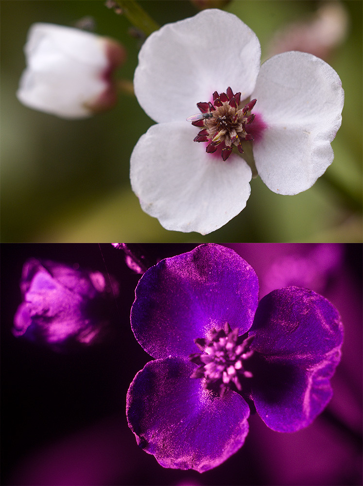 Diptych Photography Flickr Diptych Flickr Photo