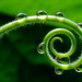 Water Drops 16