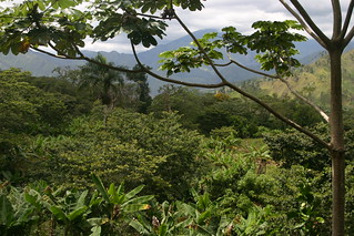 More Finca La Paz | by Dallis Bros. Coffee