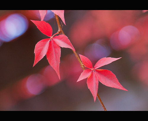 Signs of Autumn | by DTBの写真撮影