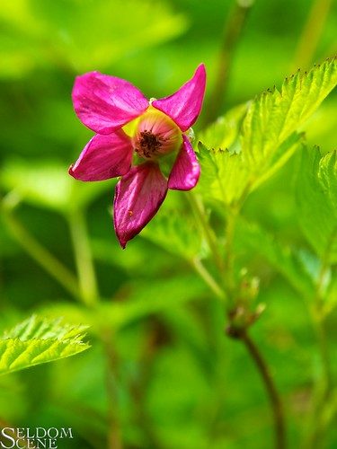 Pink on green | by Seldom Scene Photography
