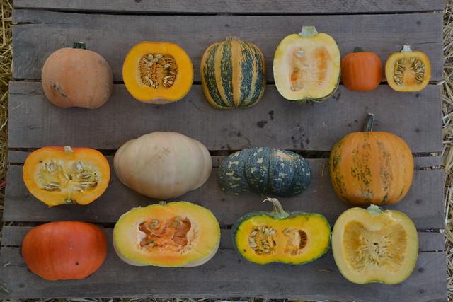 edible pumpkins flickr photo sharing