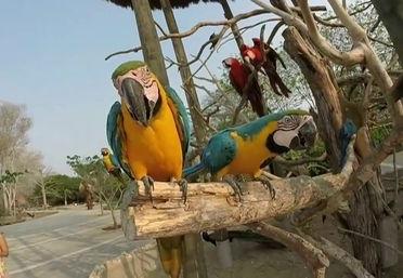 La isla de Barú un paraíso aviario