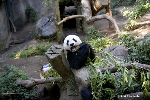 YunZi enjoying his breakfast | by Rita Petita
