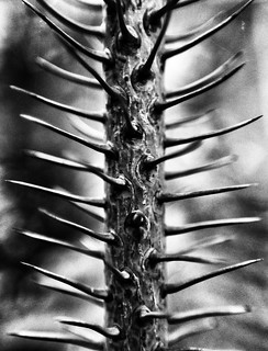 Thorns of Life! | by viralstile
