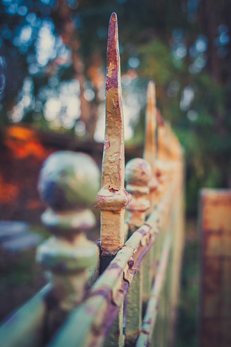 My fence for today | by MoreThanOneView