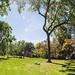 Brown University Panorama