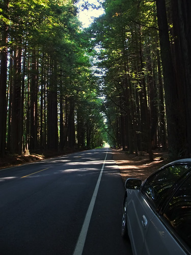 Avenue of the Giants | by ming.chen