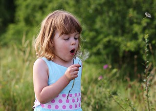 Blowing dandelions | by out in the sticks
