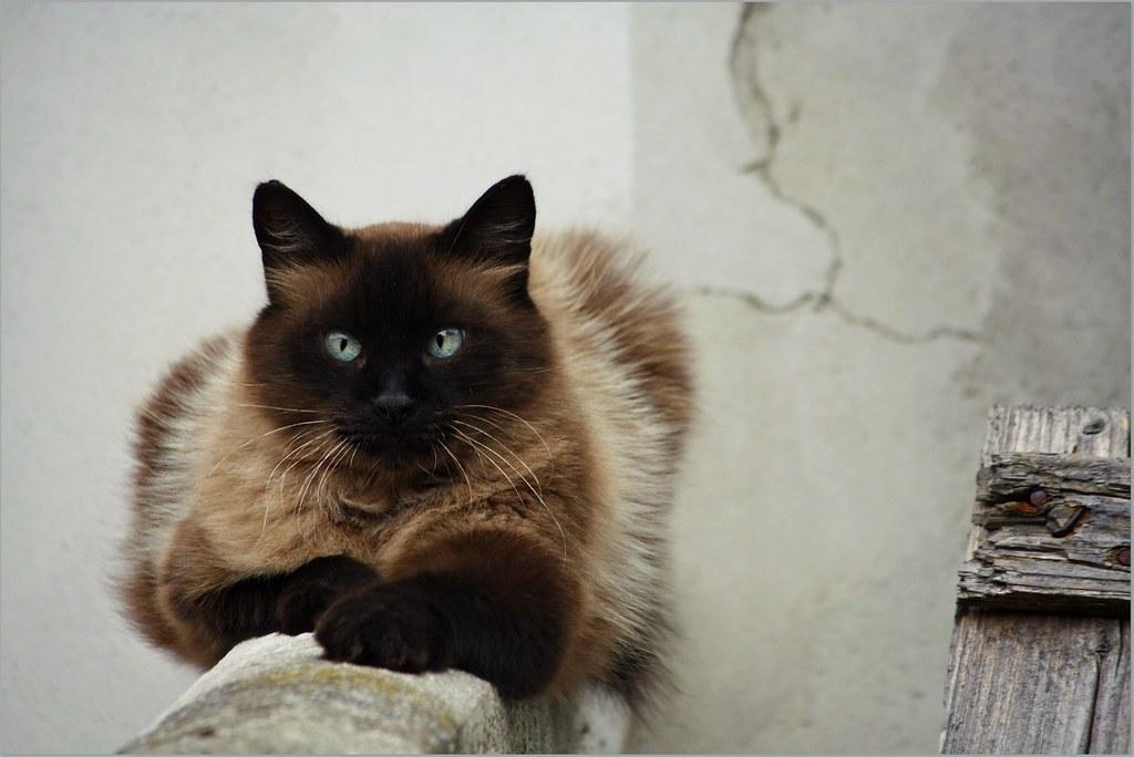 fixed male cat behavior