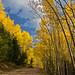 Aspen View Trail - Santa Fe National Forest