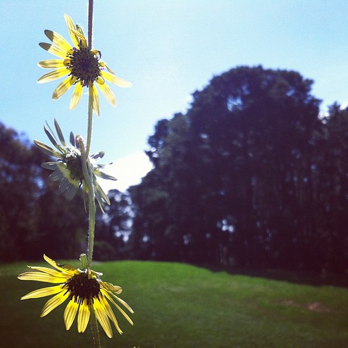 Daisy chain time | by wonderwebby