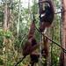 Orangutan World, Tanjung Puting Borneo Adventure-89.jpg