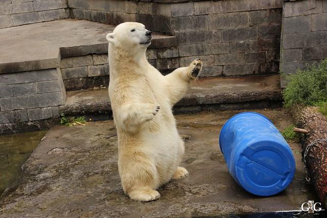 Zoo Rostock 2. Teil 20.08.201641