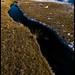 Hielo en rio Guanaco II