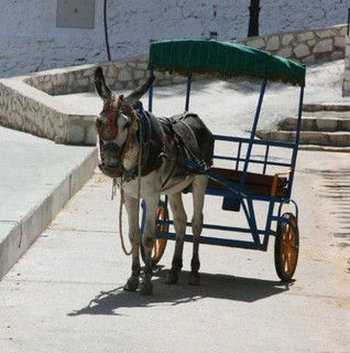 Donkey tourist taxi in Mijas, Spain. Photo copyright of The Donkey Sanctuary | by Donkey Sanctuary Press Images